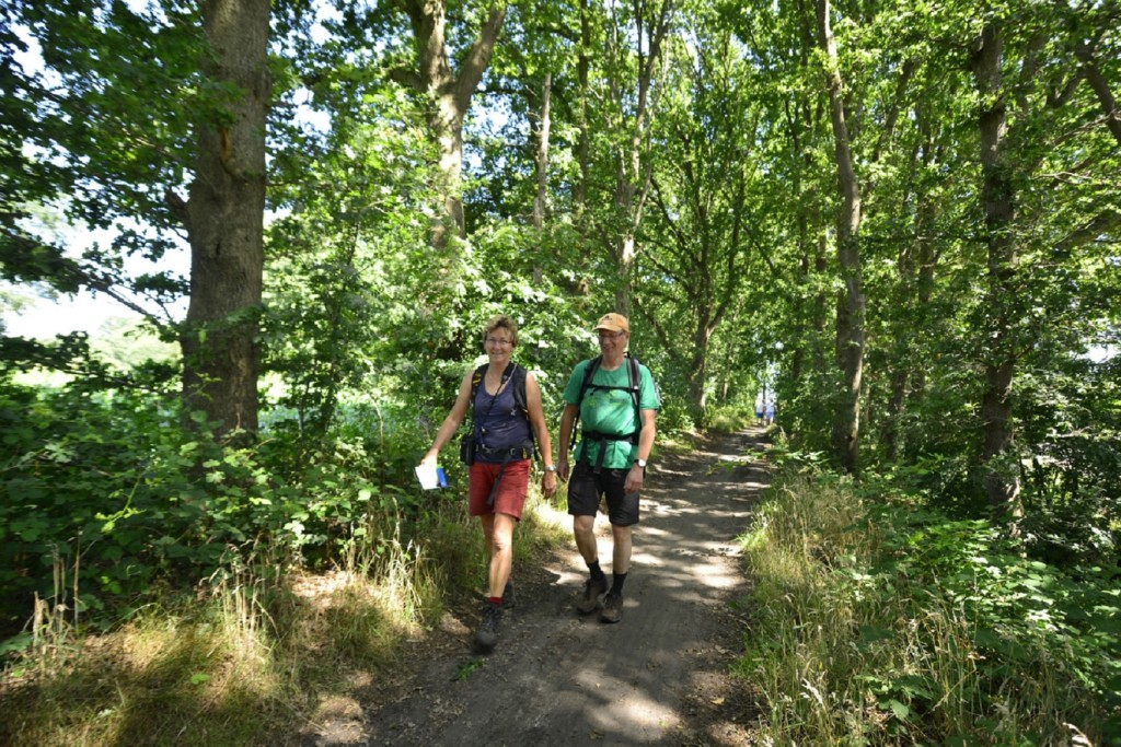 Wandelen op de Utrechtse Heuvelrug Landgoed Zonheuvel