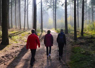 Wandelen Landgoed Zonheuvel Kaapse Bossen Nationaal Park Utrechtse Heuvelrug