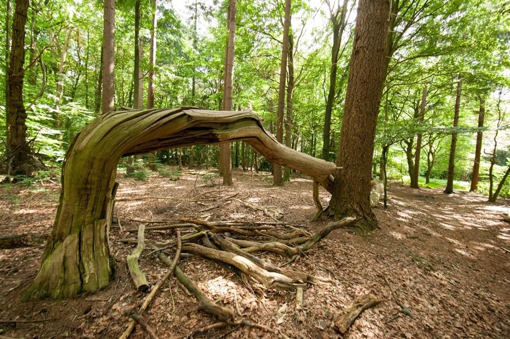 Nationaal Park Utrechtse Heuvelrug Langoed Zonheuvel